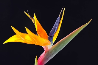 012-warm cool-colors-bird-of-paradise-flower